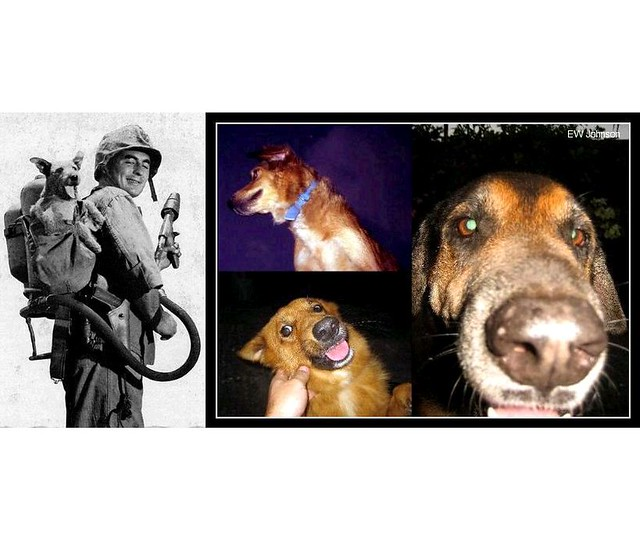 WWII Boonie Dogs