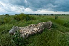 Log on Two Tree Island