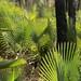 Palmas -  Backlit Palms; al sur de Zapotitlán Palmas, Región Mixteca, Oaxaca, Mexico por Lon&Queta
