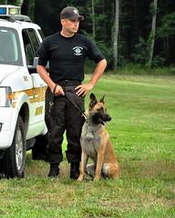 conformation show(0.0), schutzhund(0.0), german shepherd dog(1.0), animal(1.0), law enforcement(1.0), dog(1.0), pet(1.0), mammal(1.0), dog walking(1.0), police dog(1.0),