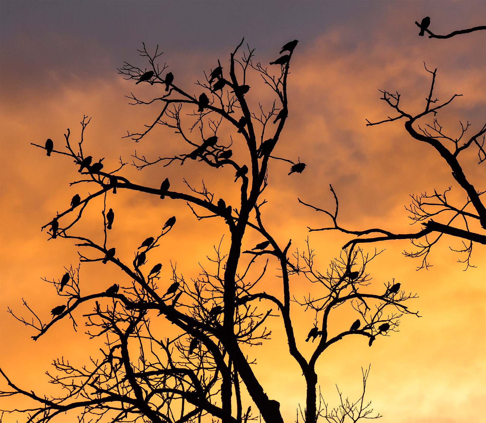 silhouetted birds in a tree