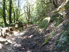 Sentier Mare a Mare vers Levie (pour les troupeaux ?)