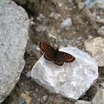 Onbekende vlinder