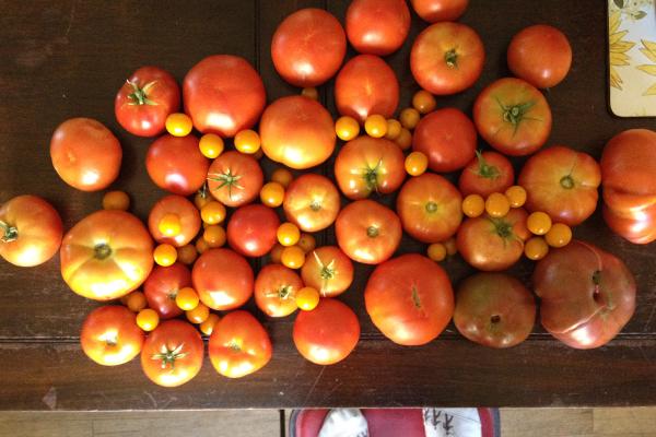 a day's garden harvest