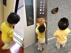 とらちゃんとエレベーターと猫 (2012/7/20)
