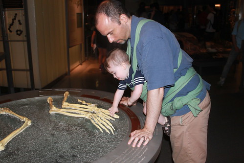 New York - American Museum of Natural History - Sagan Touchs Ancestor Skeleton (Landscape)