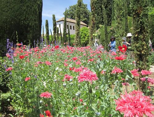 ヘネラリーフェの花壇 2012年6月4日 by Poran111