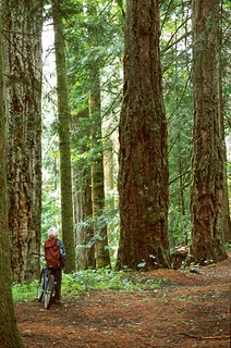 B.C. protects old growth forests on Sunshine Coast