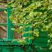 Window view garden by Jean-Luc Peluchon