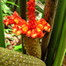 Fun flowers at the  Botanic Gardens in Puerto Viejo, Costa Rica 29APR12