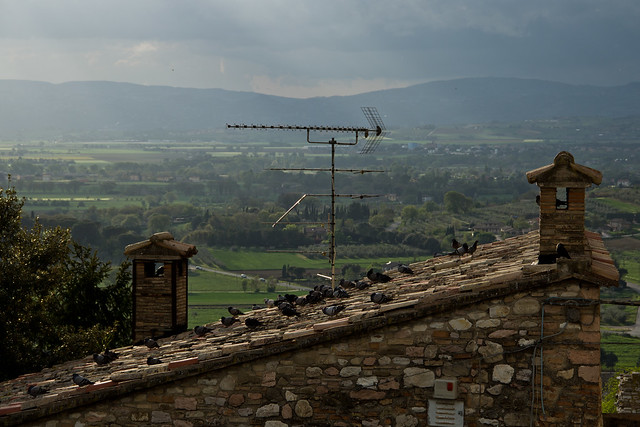 Assisi - Pigeons on a Rooftop
