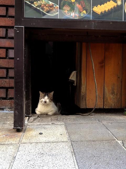 渋谷の猫 - Shibuya