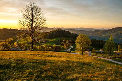 morning trees sunrise view path slovenia slovenija gora limbarska