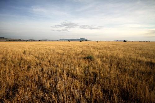 africa tanzania savannah serengeti