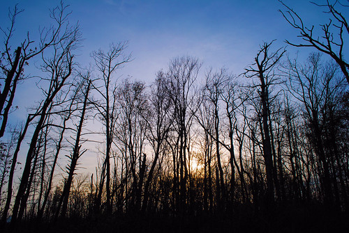 trees sunset tennessee eerie spooky trail appalachian