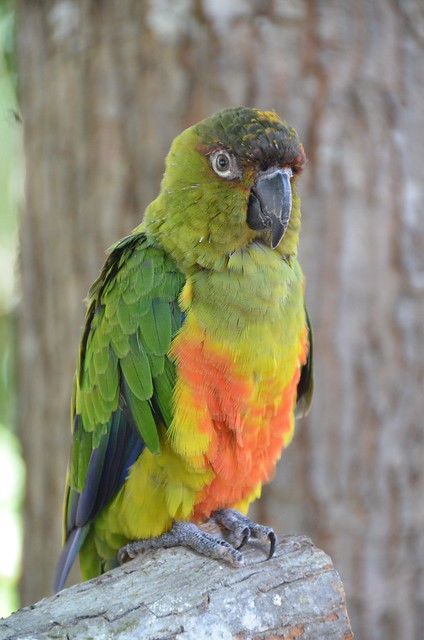 Garden Cafe Parrots Ferry Road