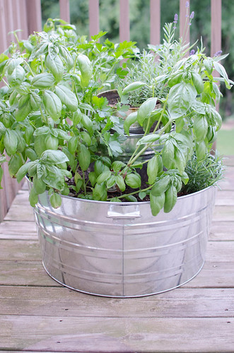 Galvanized Tub Container Herb Garden