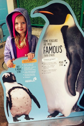 Emperor penguins are taller than my 7-year-old