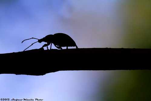 356/365 [365 Project] - Beetle Silhouette