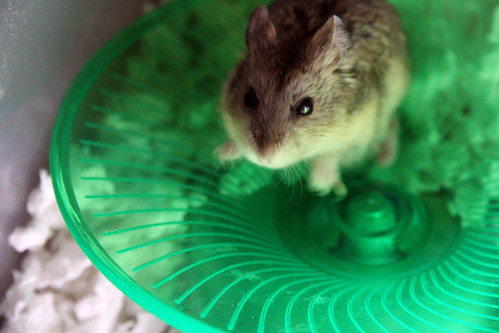 Vanessa, Hopping in Her Saucer