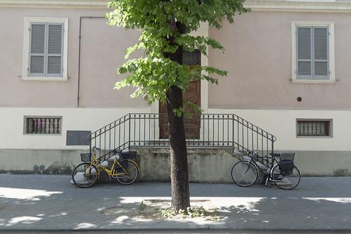 urban tree bicycle suburban fabrizio urbano albero periferia umbria 2012 bicicletta olivi foligno