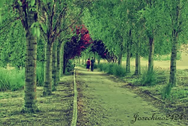 Tardes de paseo