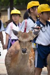 Deer of Nara