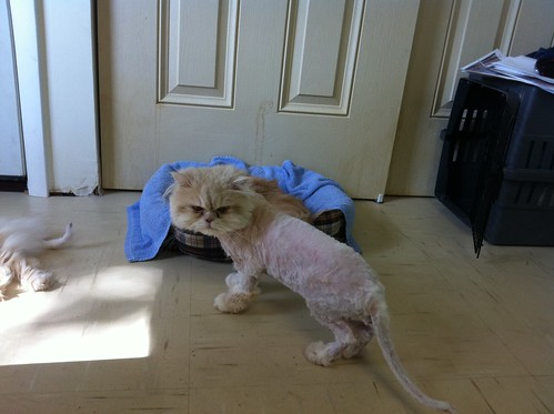 feeling better after being shaved