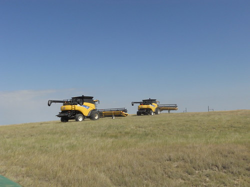 Moving across the pasture to the new field