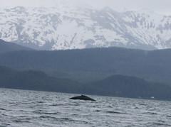 Whale- Juneau 2667 cu