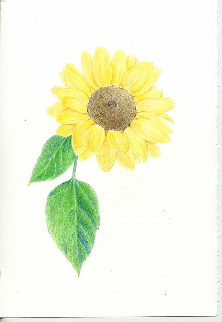 2012_06_30_sunflower_10