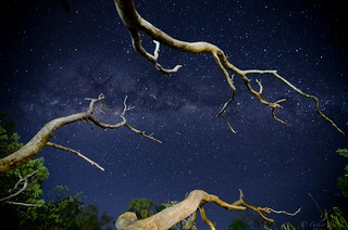 Stars and Branches