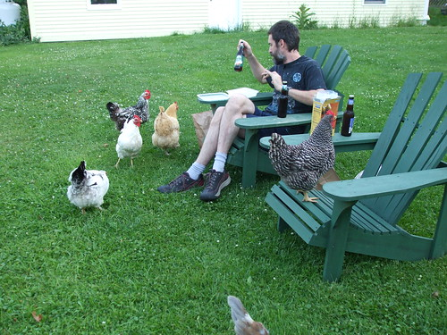 David and the chickens