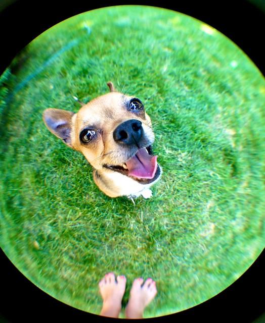 anteketborka.blogspot.com, mio14