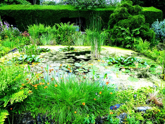 Luxuriant Shades of Green at Greenbank Garden