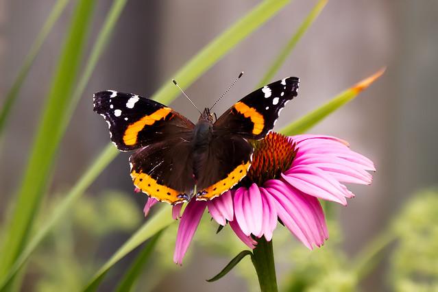 butterflyyard_07_2012
