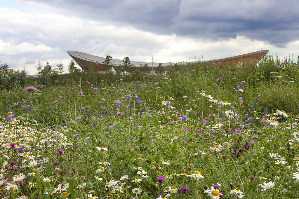2012-07-19 Wild flowers in front of the Velodrome 2