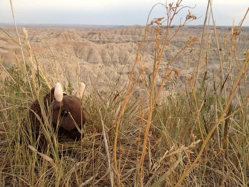 Buddy at Badlands National Park