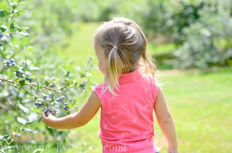 Blueberry Picking-020.jpg