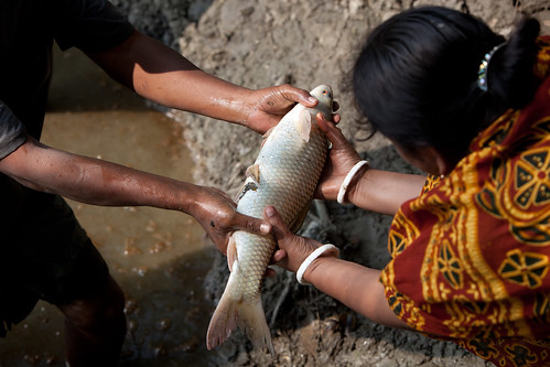 Aquaculture projects in Khulna, Bangladesh. Photo by Mike Lusmore/Duckrabbit, 2012.