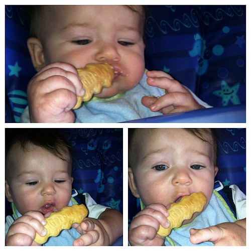 Someone had their first gerber cookie. Bless his heart he took a bite of it. He is teething so much. I think he is going to get a mouth full of teeth all at once! #instagood #cord #baby #cookie