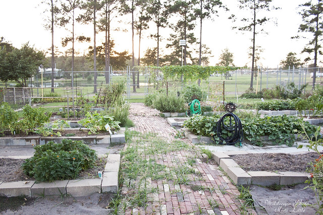 gardensummer