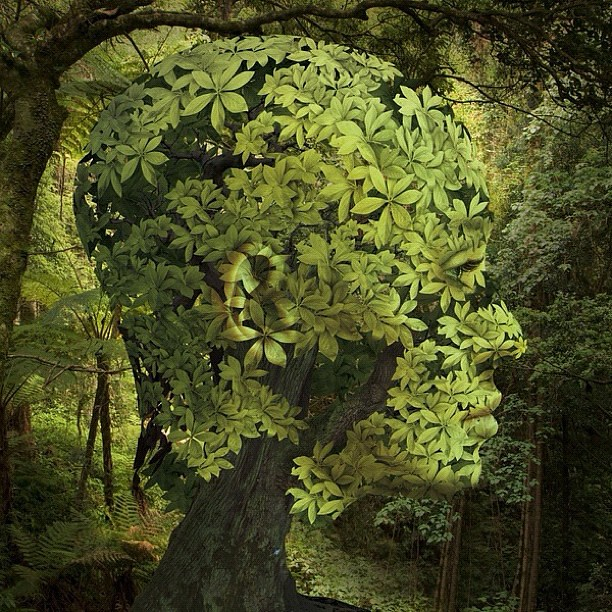 Forrest Picture Art