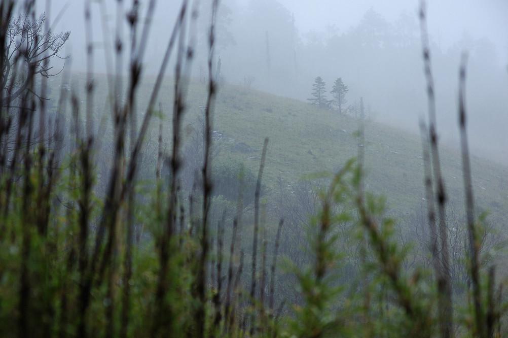 雪山主東下翠池-Day1-060