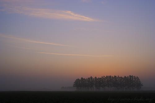 朝もやの防風林