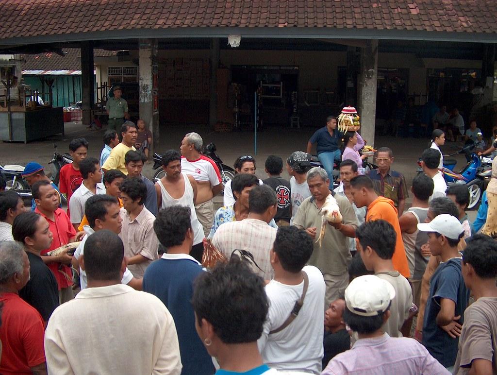 Indonesia - Bali - Cockfighting - 4 - Download Photo