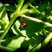 LadyLady*Ladybird ! by Şeyma*