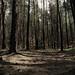 Lupujova Woods 2
