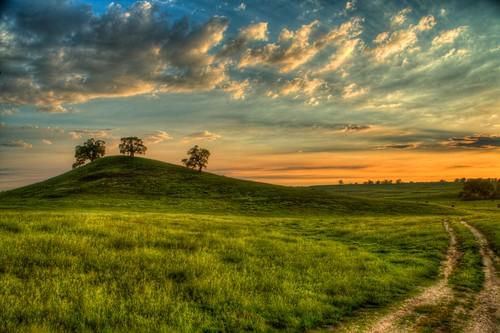 california road trees sunset spring oak dirt northern