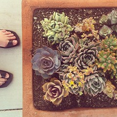 Succulents! #succulent #instagram #iphone